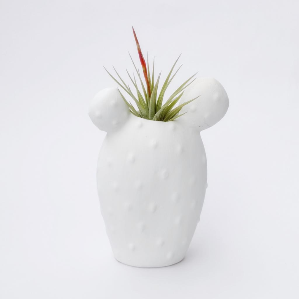 Cactus + Espinosae Matera_1