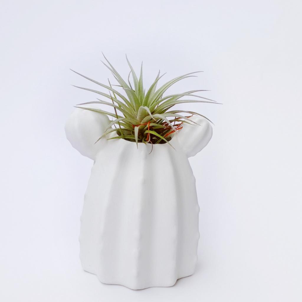 Cactus + Secunda Matera_1