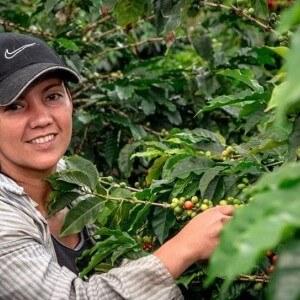 Peet's Coffee y Mujeres Cafeteras Coocentral